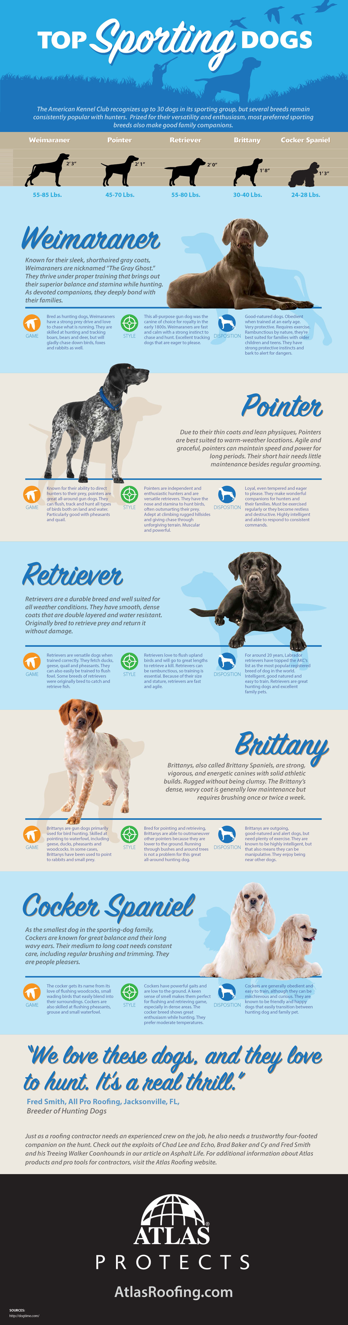 Types of Hunting Dogs Infographic