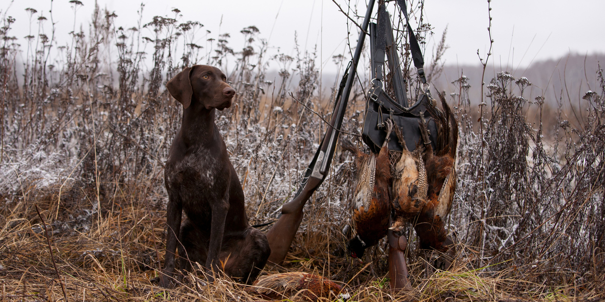 Hunting dog with birds
